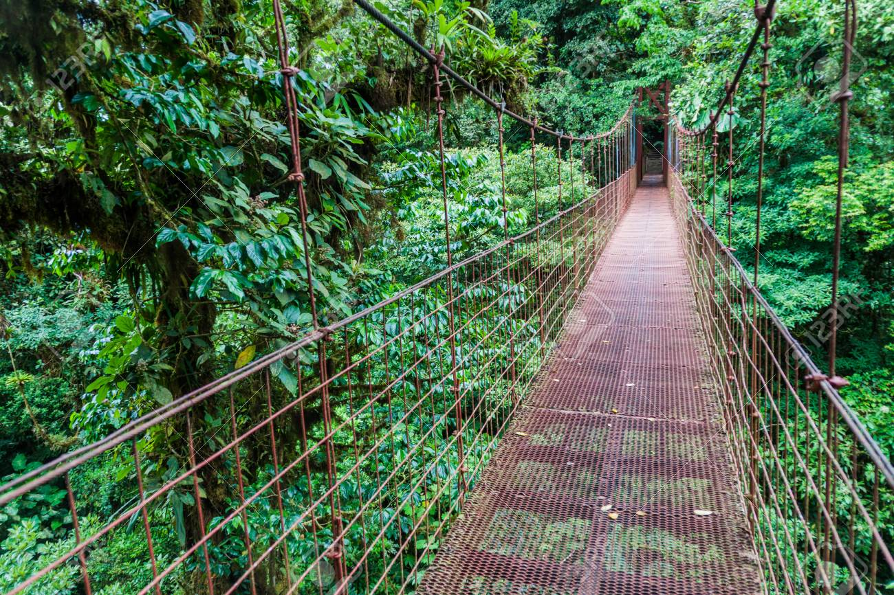 Suspension Bridge In The Cloud Forest Of Reserva Biologica Bosque Stock Photo Picture And Royalty Free Image Image 78882258
