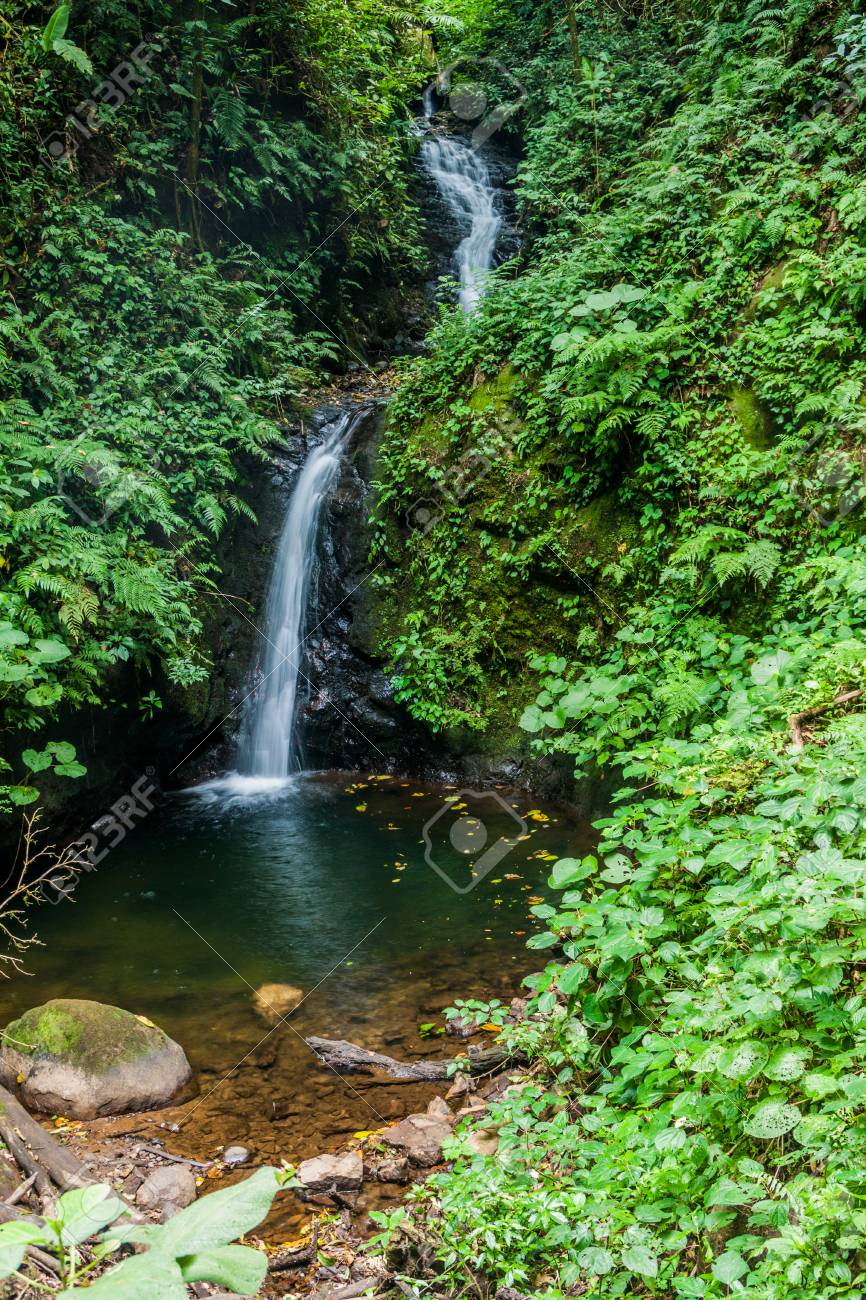San Luis Waterfall In Monteverde A Rica Royalty Stock Photo