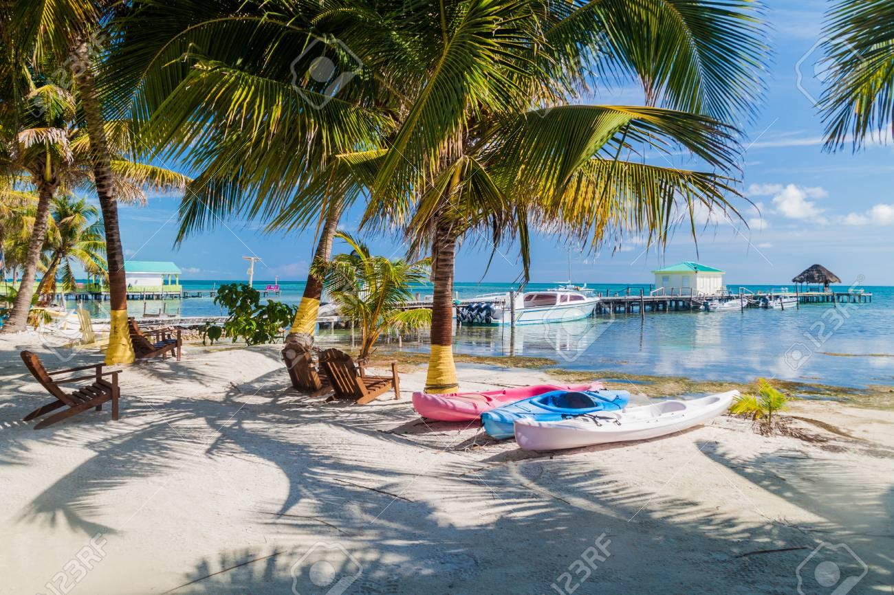 Palms and beach at Caye Caulker island, Belize - 92582290