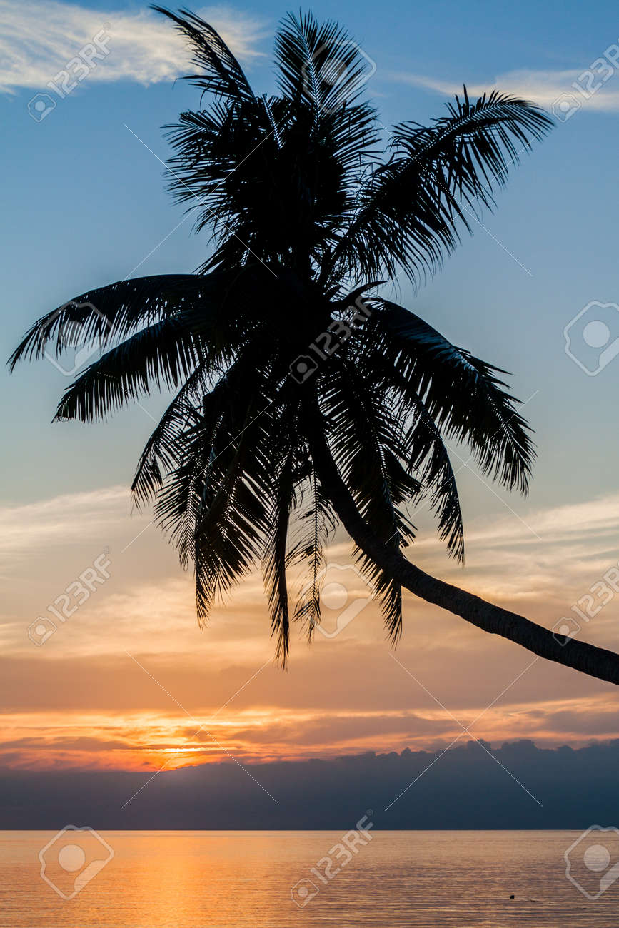 Sunset view of palm silhouette on Siquijor island, Philippines. - 166689662