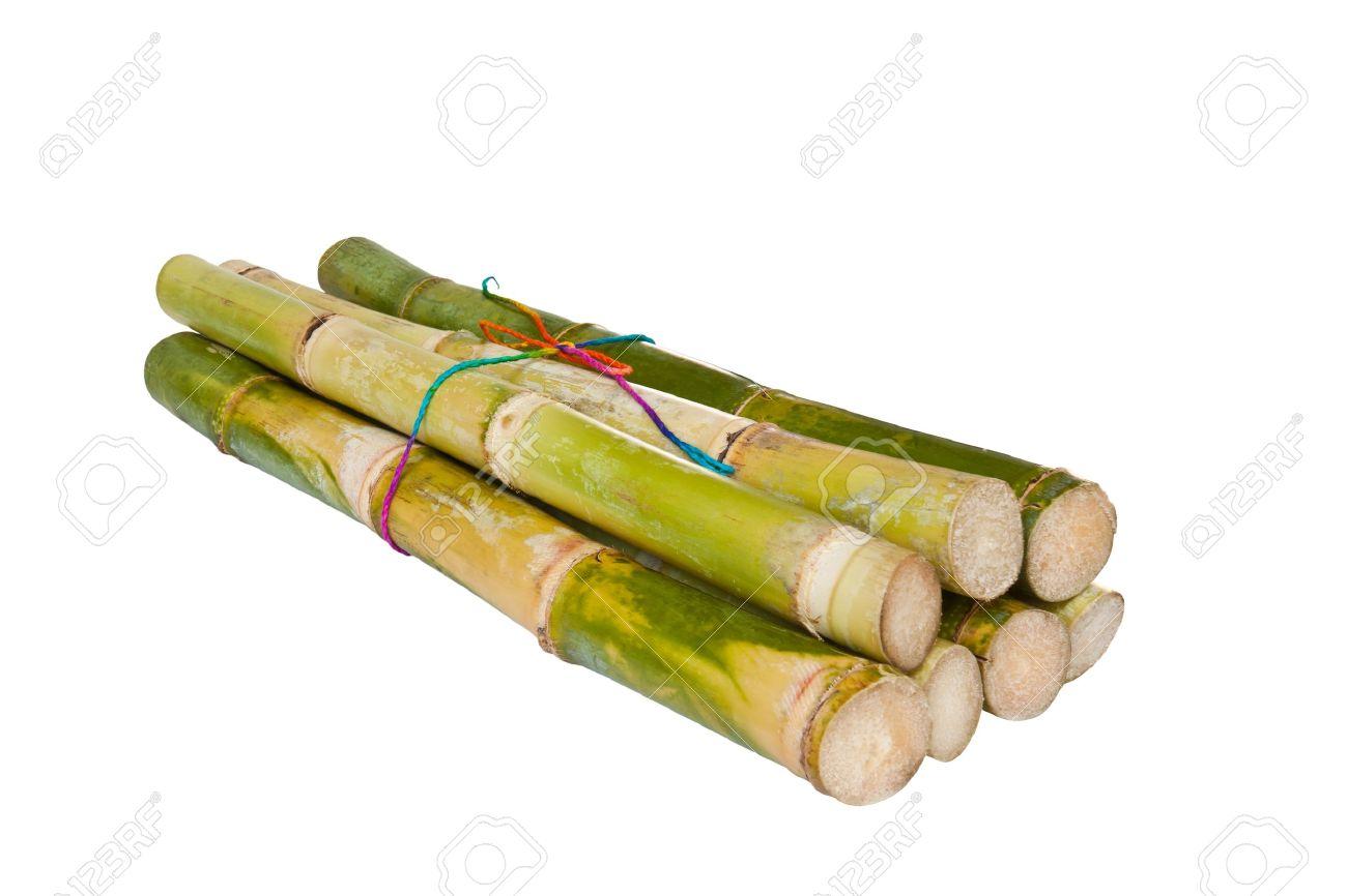 Bunch of fresh sugar cane in white background - 11273343