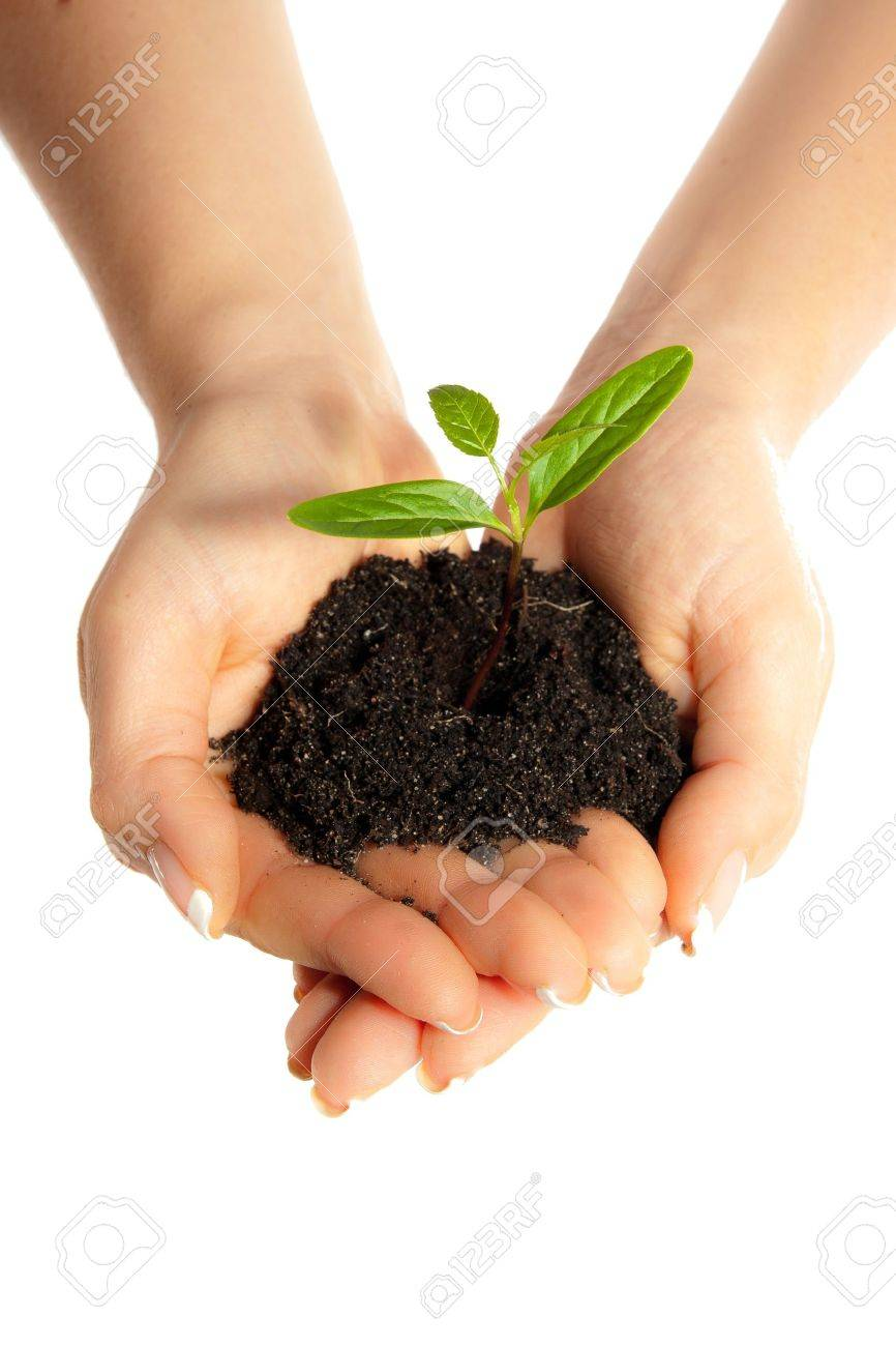 Isolated young plant in woman hands Stock Photo - 6916356