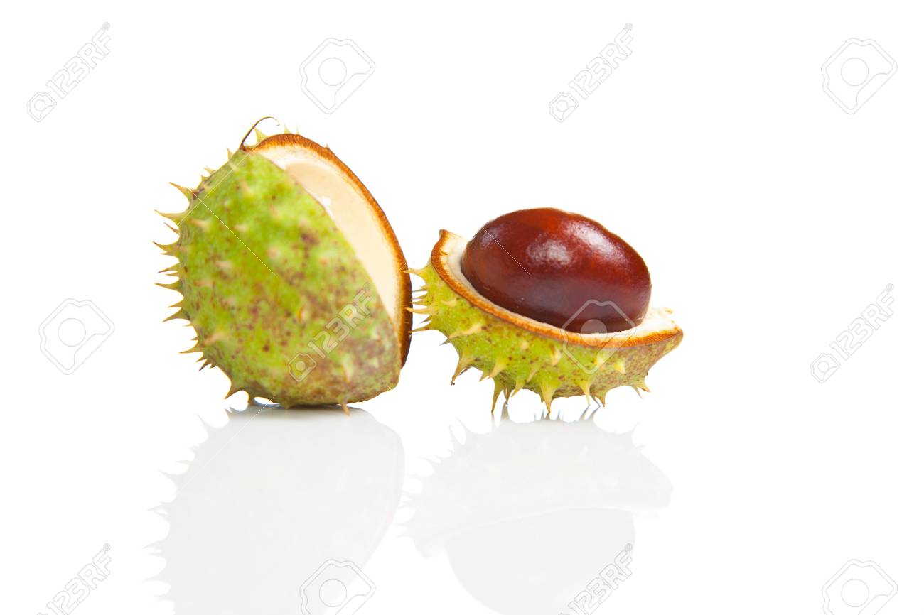 Composition of autumn chestnuts and leaves on isolated background Stock Photo - 7779772