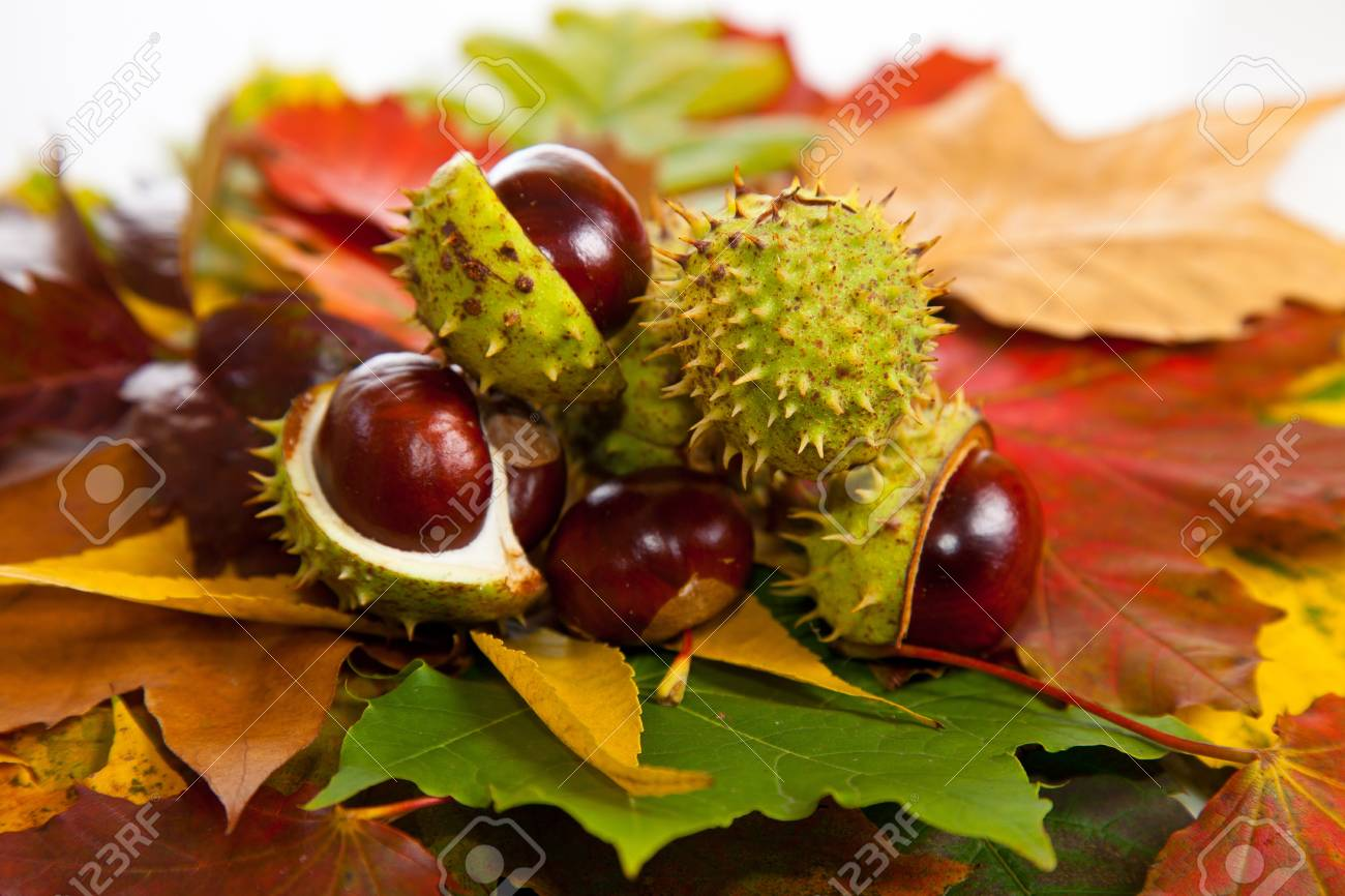 Composition of autumn chestnuts and leaves on isolated background Stock Photo - 7779850