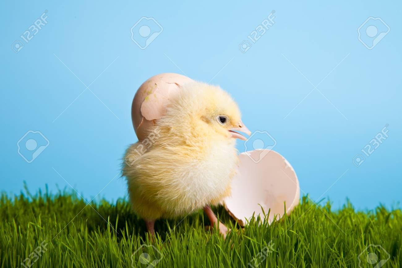Easter eggs and chickens on green grass on blue background Stock Photo - 8819450