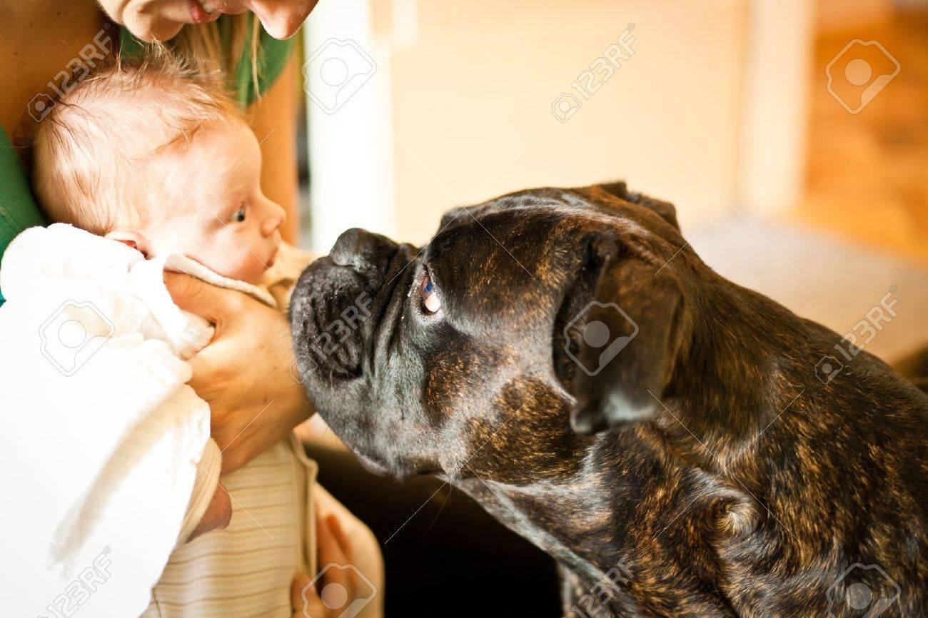 Infant newborn meeting a dog Stock Photo - 11745216