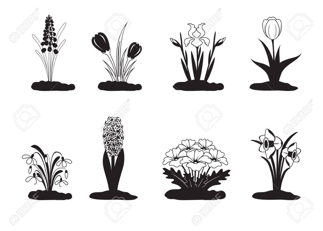 Black white vector illustration of spring flower royalty free black white vector illustration of spring flower stock vector 18001142 mightylinksfo