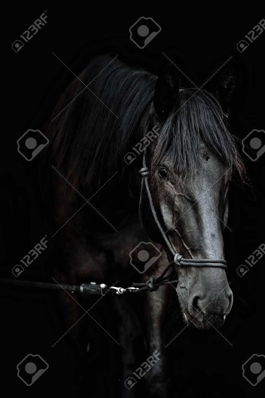 Portrait of a beautiful black stallion on a black background - 120597610