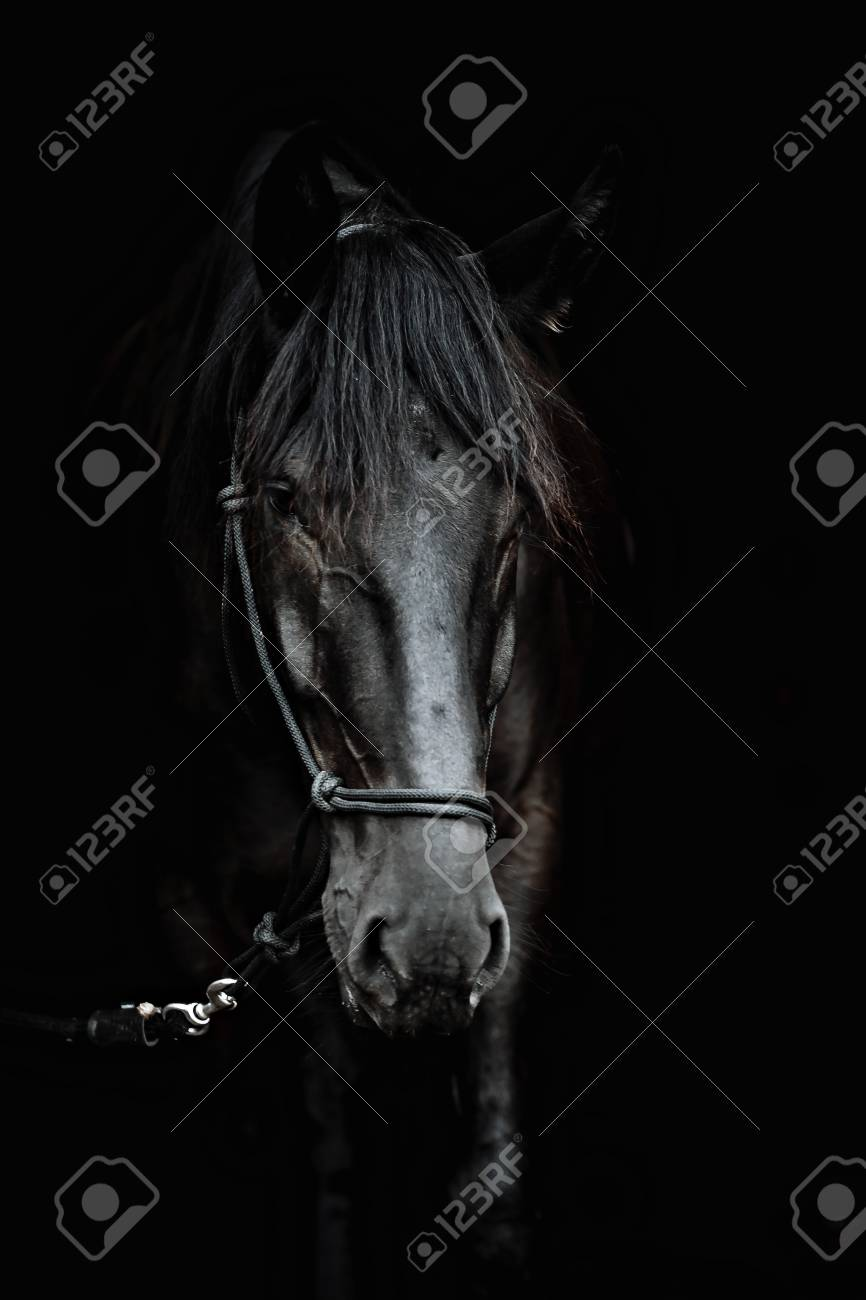 Portrait Of A Beautiful Black Stallion On A Black Background Stock Photo Picture And Royalty Free Image Image 120597619