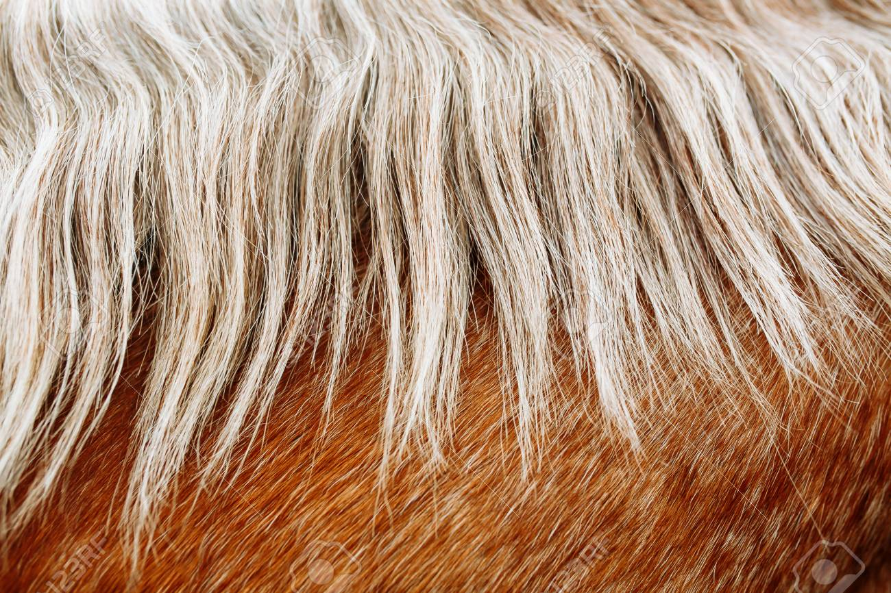 Red and white horse hair, horse mane - 120253498