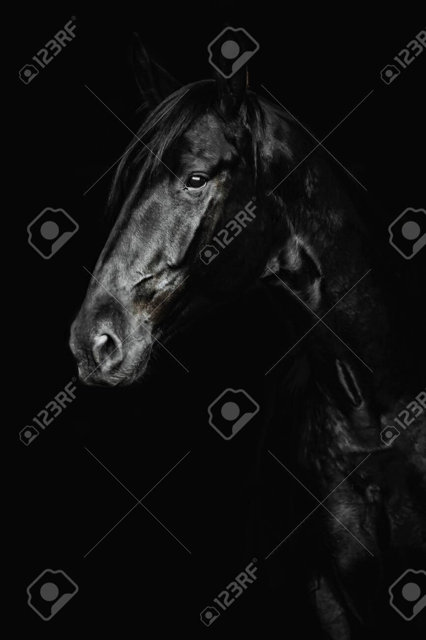 Portrait Of A Beautiful Black Horse On The Black Background Stock Photo Picture And Royalty Free Image Image 124964217
