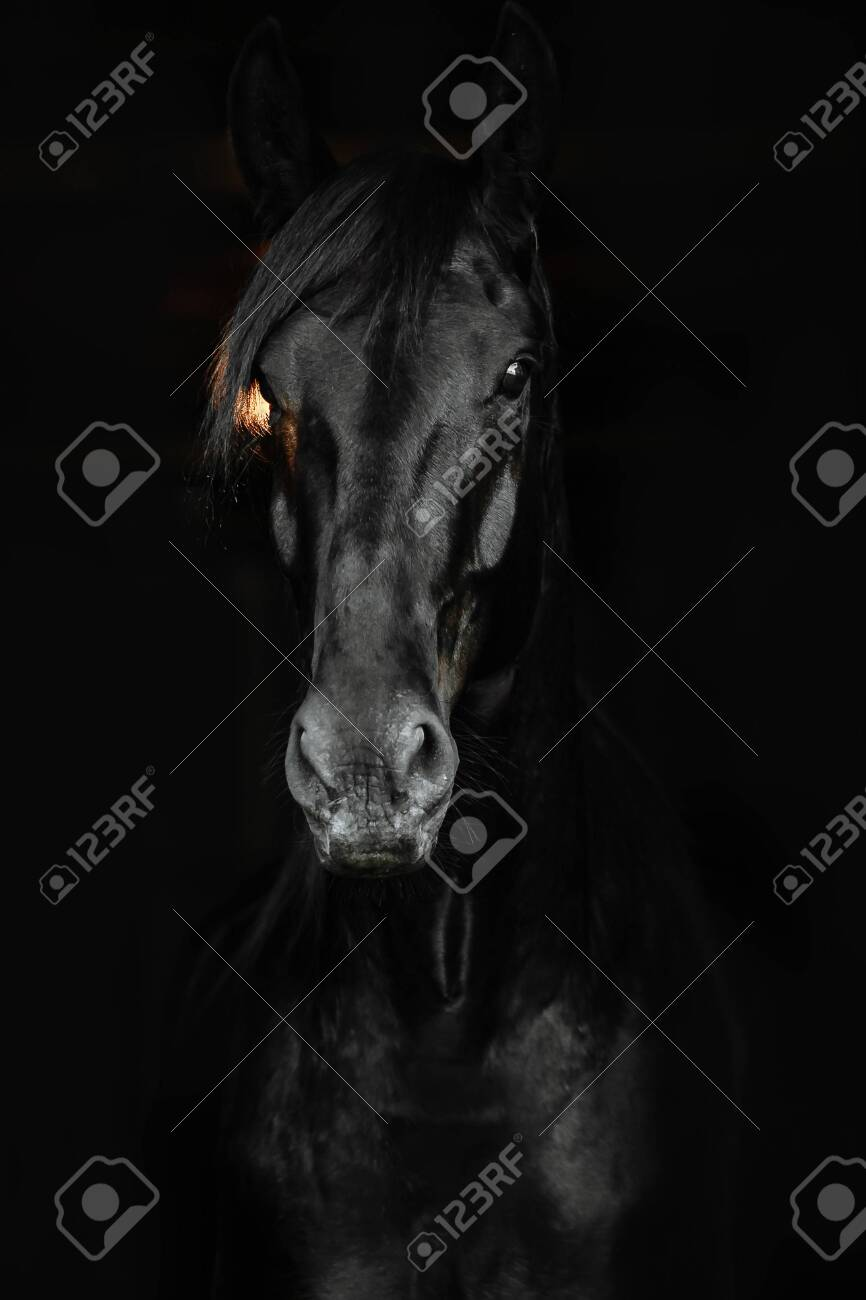 Portrait Of A Beautiful Black Horse On The Black Background Stock Photo Picture And Royalty Free Image Image 124964225