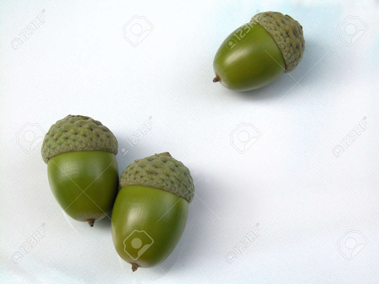 green acorns isolated Stock Photo - 471557