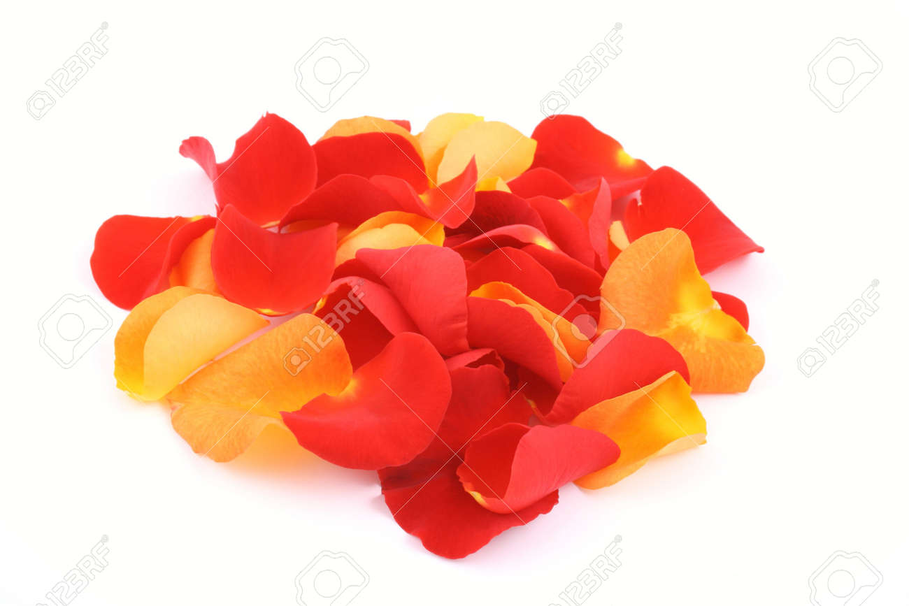 pile of red and orange rose petals isolated on white Stock Photo - 602112