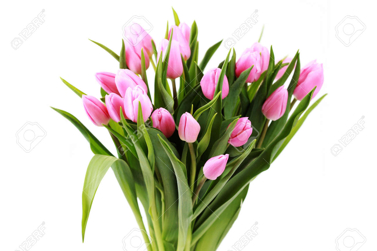 Bouquet of lovely pink tulips on white background flowers stock bouquet of lovely pink tulips on white background flowers stock photo 6803233 dhlflorist Image collections