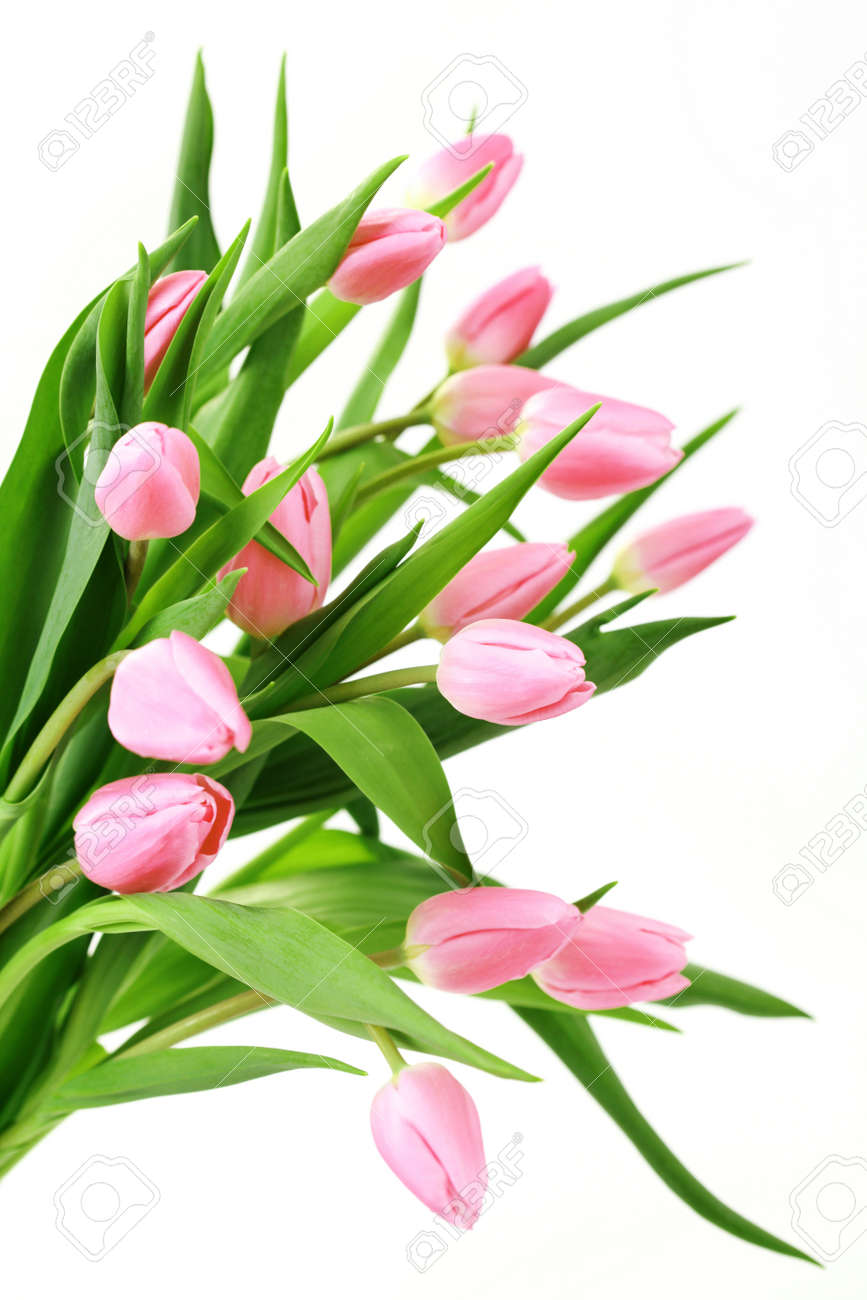 Bouquet of lovely pink tulips on white background flowers stock bouquet of lovely pink tulips on white background flowers stock photo 6803226 dhlflorist Image collections