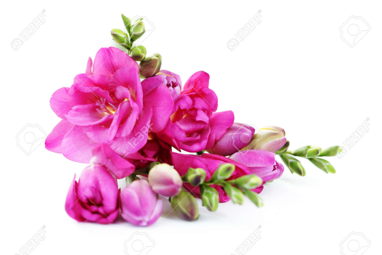 Bunch of lovely freesia on white background flowers and plants bunch of lovely freesia on white background flowers and plants stock photo 8935296 dhlflorist Image collections