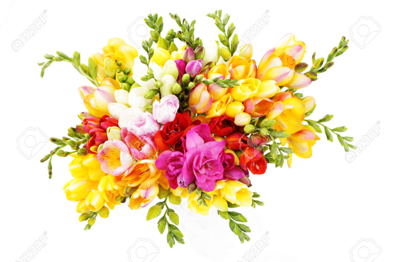 Bunch Of Lovely Freesia On White Background Flowers And Plants