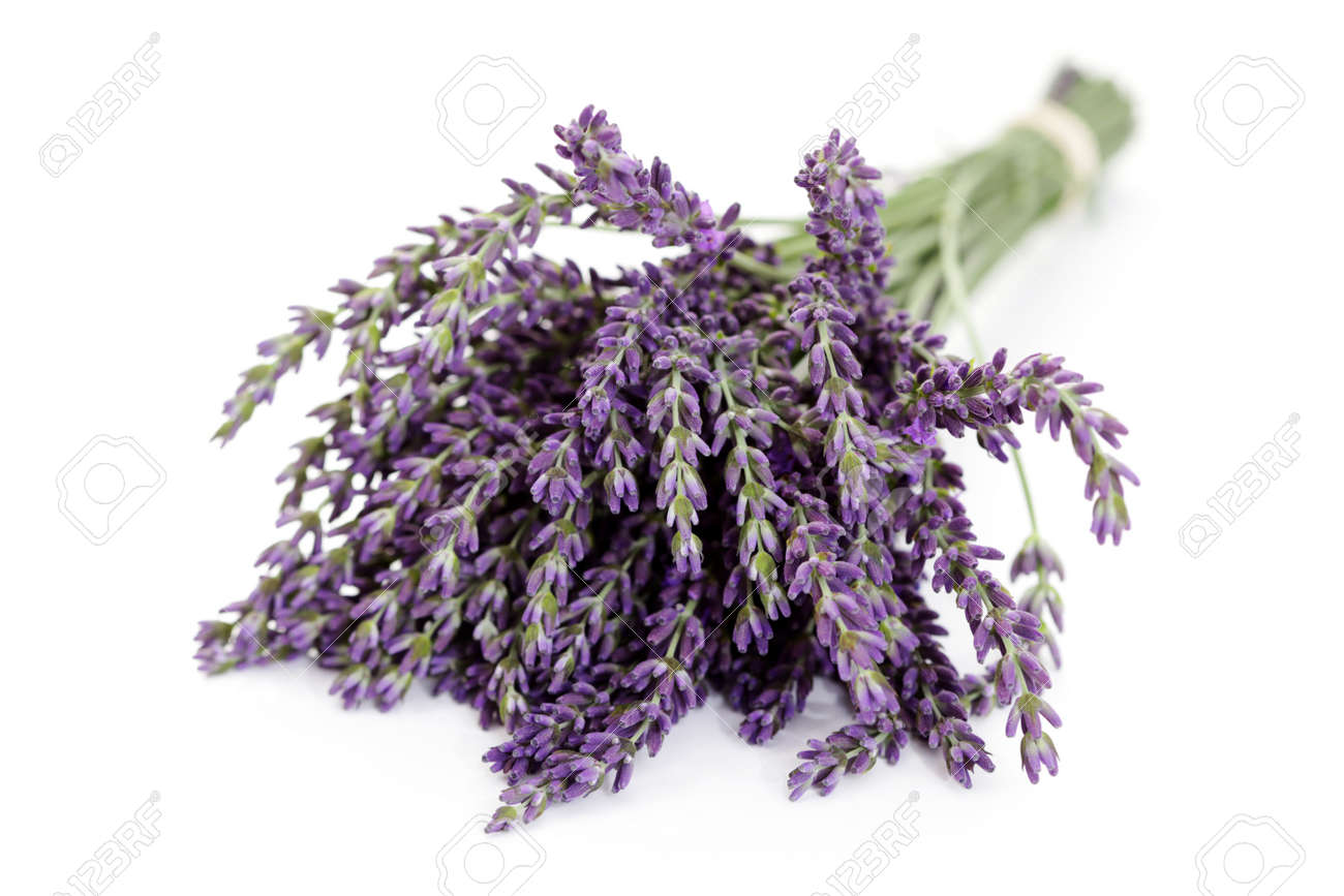 Lavender flowers on white background flowers and plants stock lavender flowers on white background flowers and plants stock photo 12391940 dhlflorist Image collections