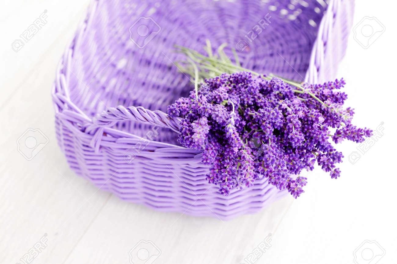Bildergebnis für lavende
