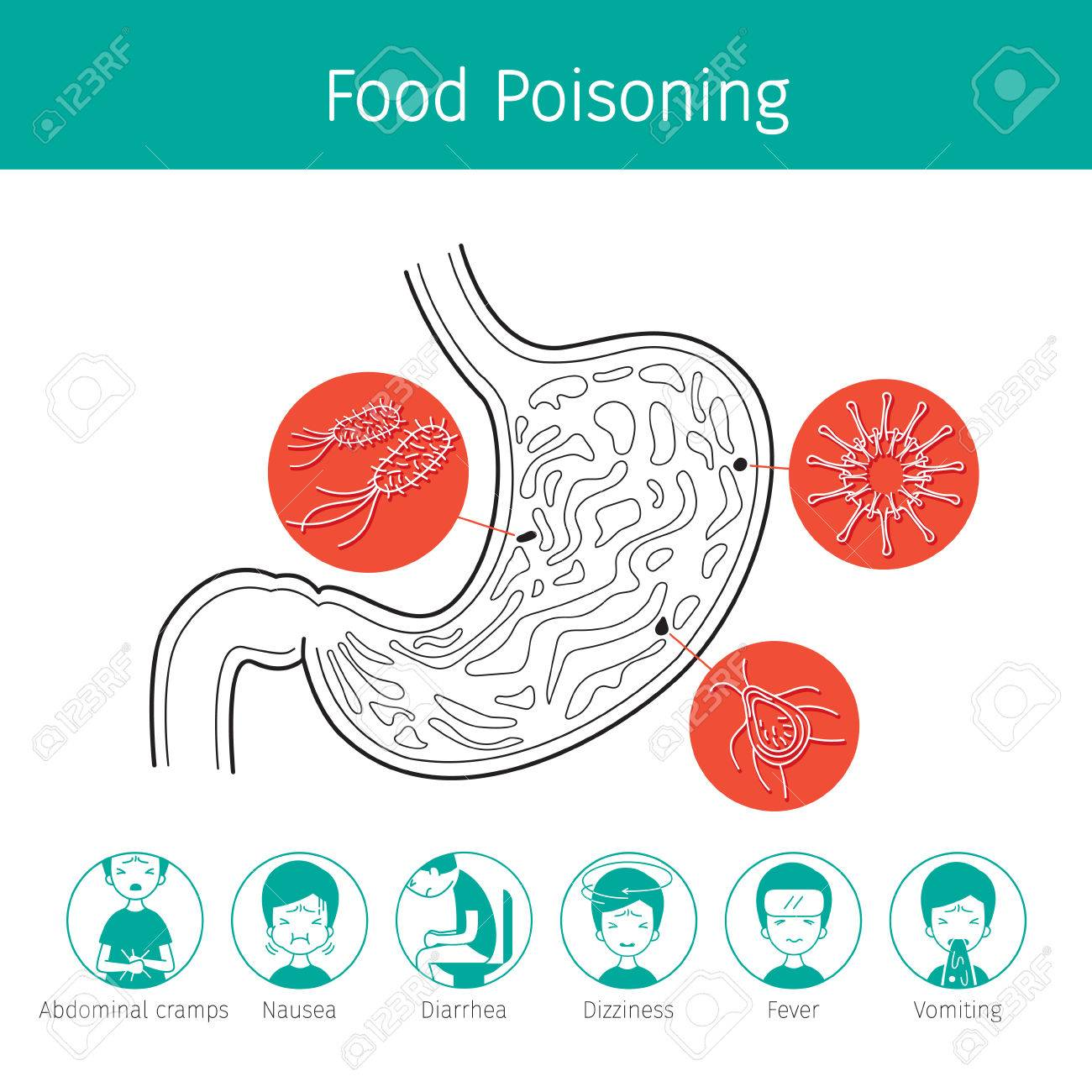 Germs In Stomach Cause To Stomachache And Food Poisoning, Stomach ...