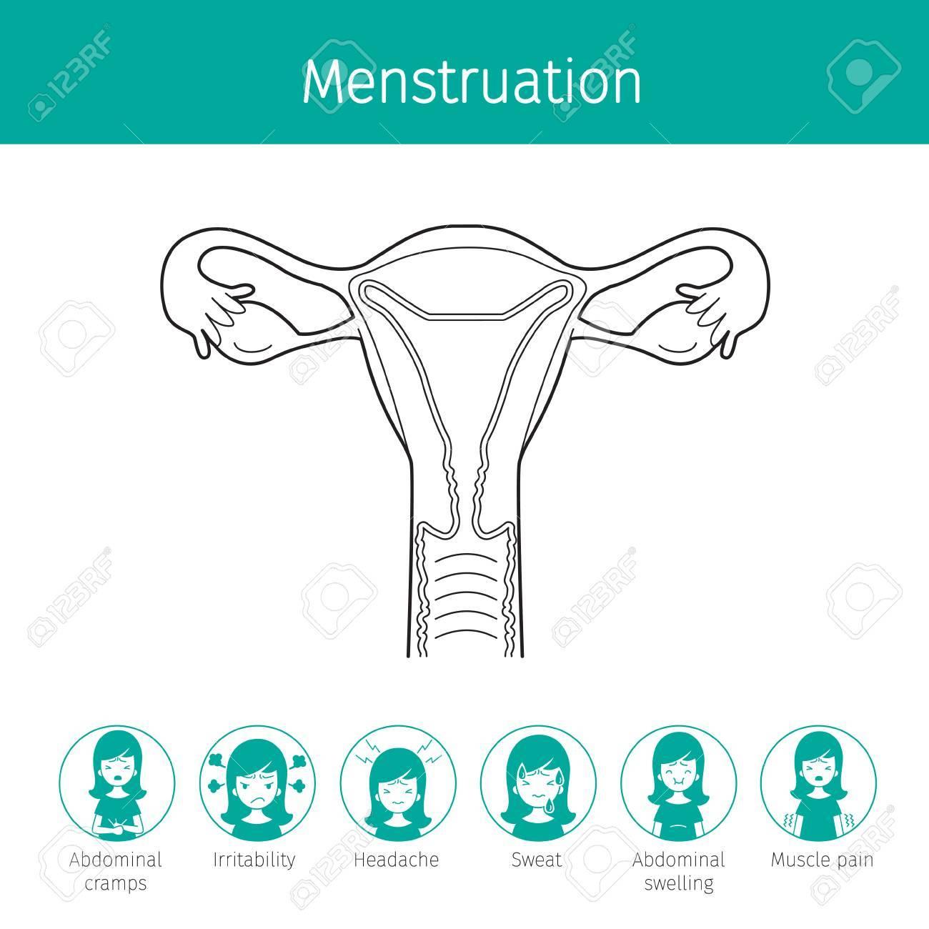 Ilustración De útero Humano, Esquema Y Menstruación Síntomas De ...
