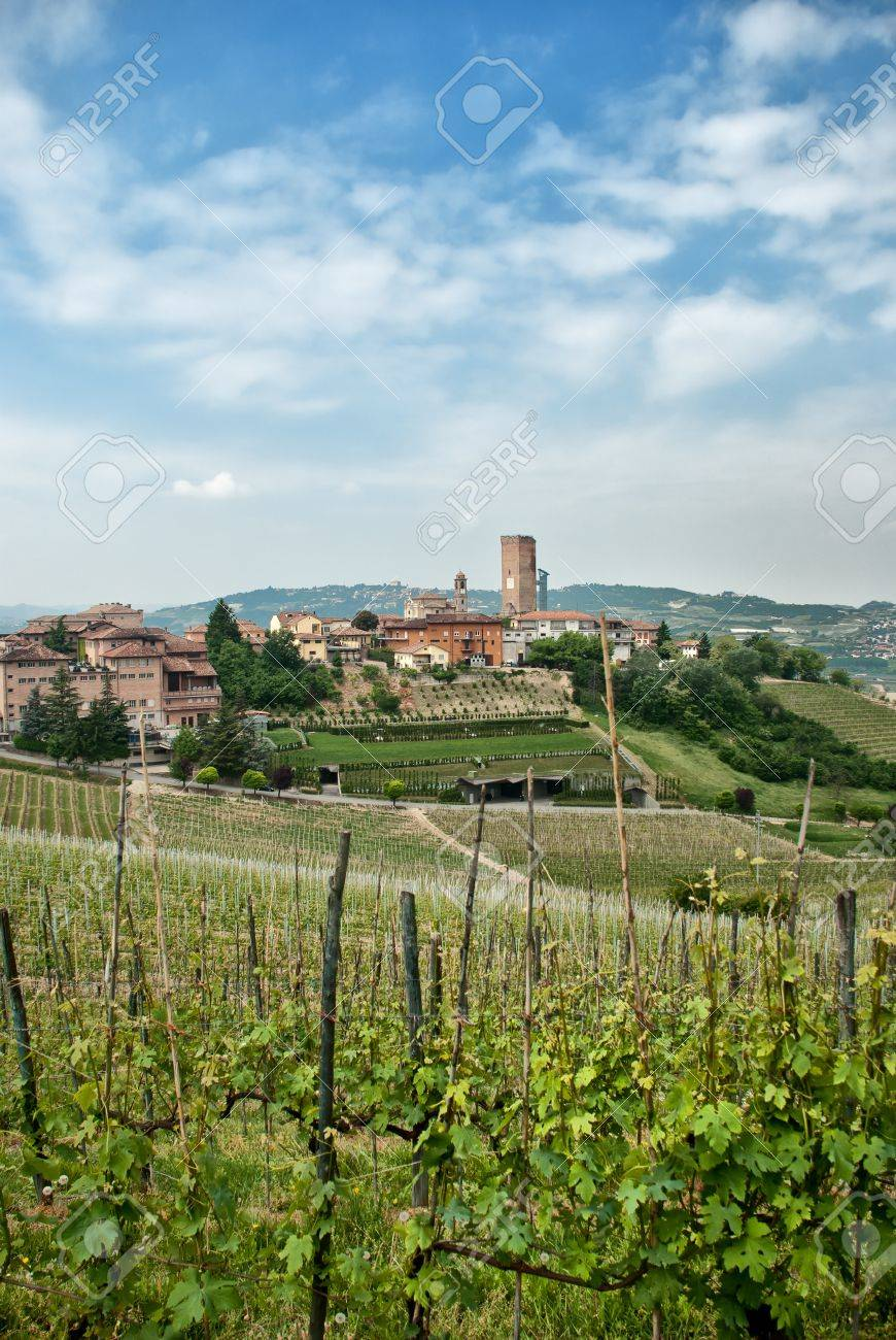 Vineyards around a country town Stock Photo - 10345507