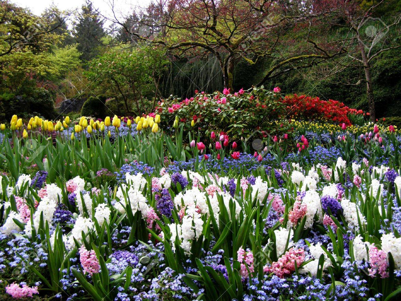 spring in butchart gardens victoria canada stock photo picture