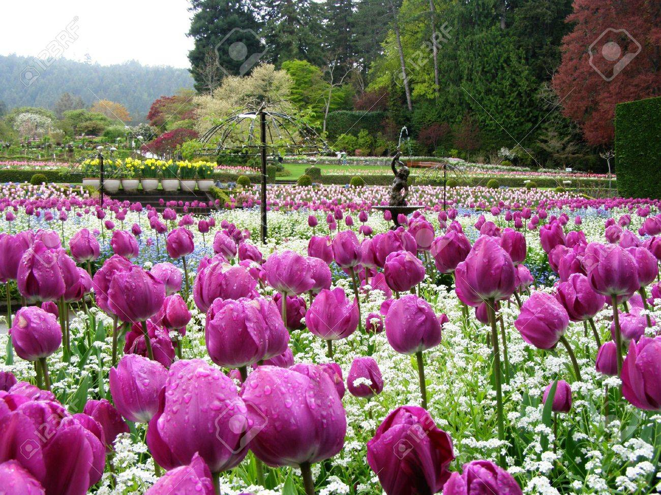 Vancouver to Victoria and Butchart Gardens Tour by Bus 2019