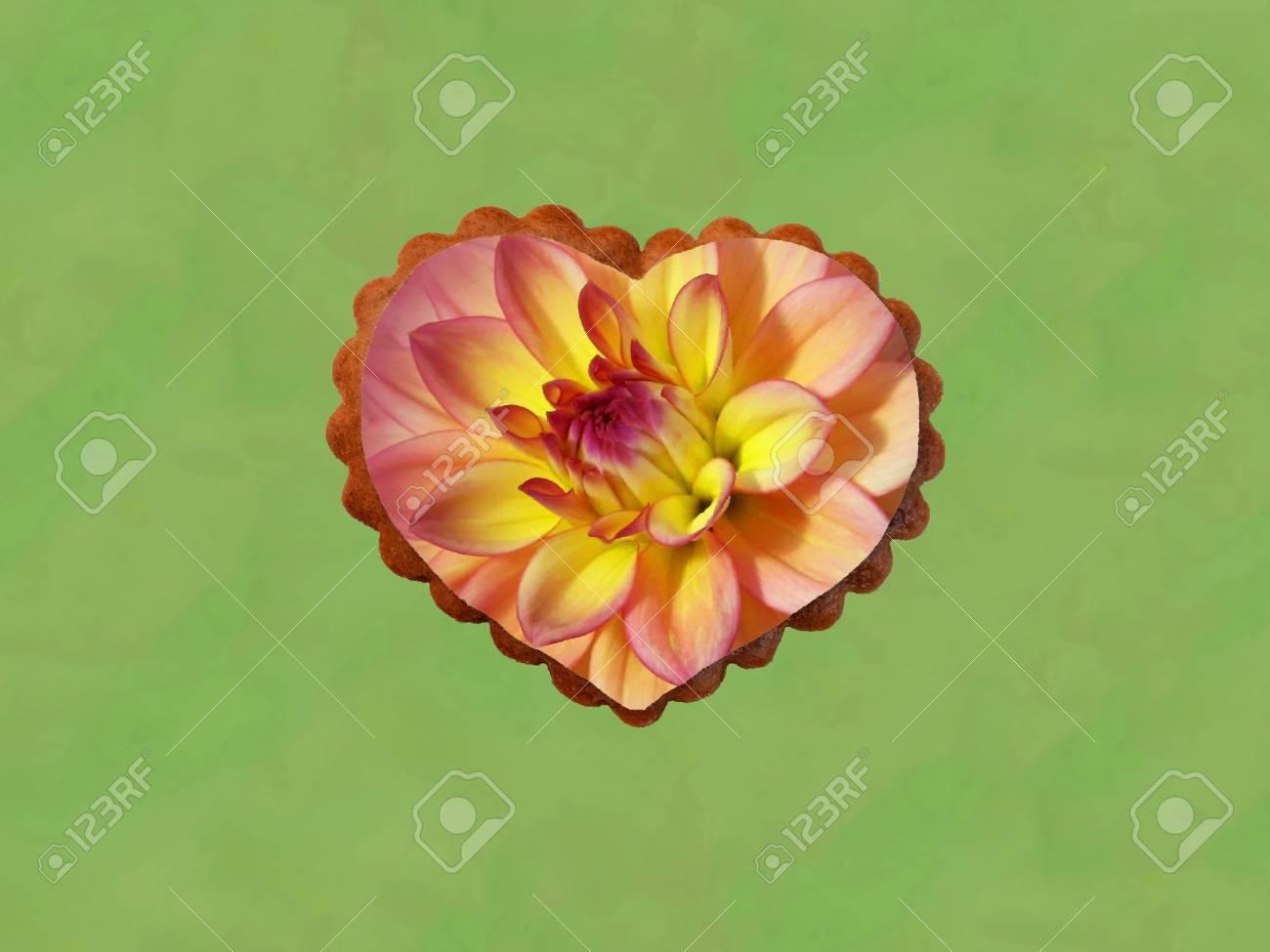 Flor De Dalia En Forma De Corazón Aislado En El Fondo Verde Fotos
