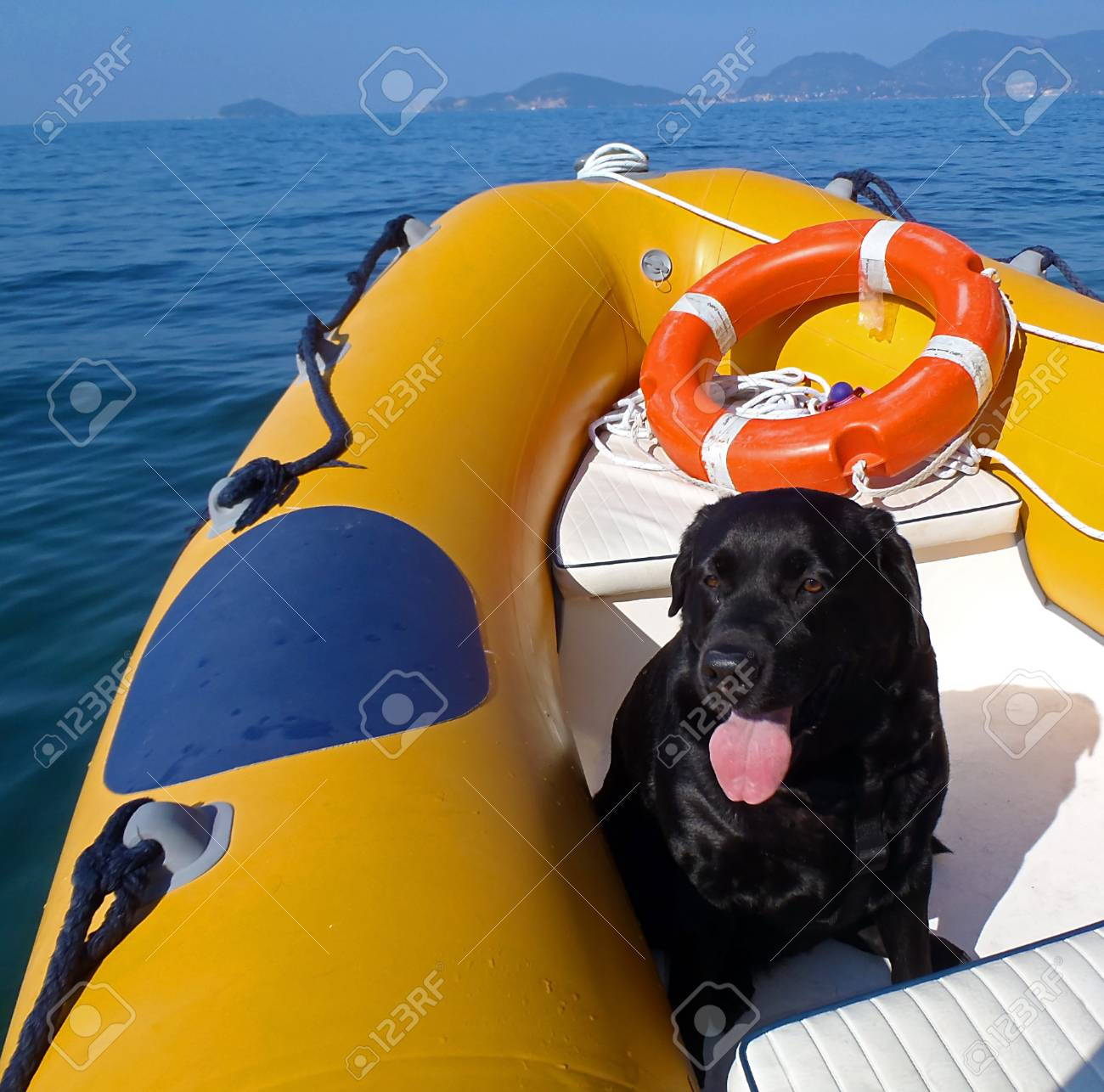 Labrador in a Dinghy in Liguria Stock Photo - 16605224