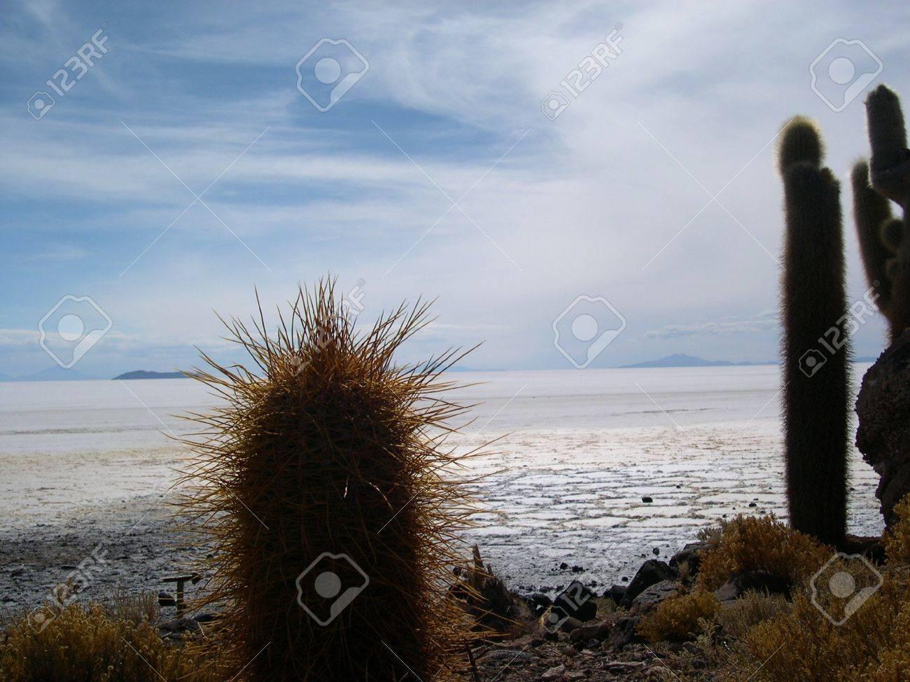 Cactus on fish island  Salar de Uyuni  Bolivia Stock Photo - 18231394