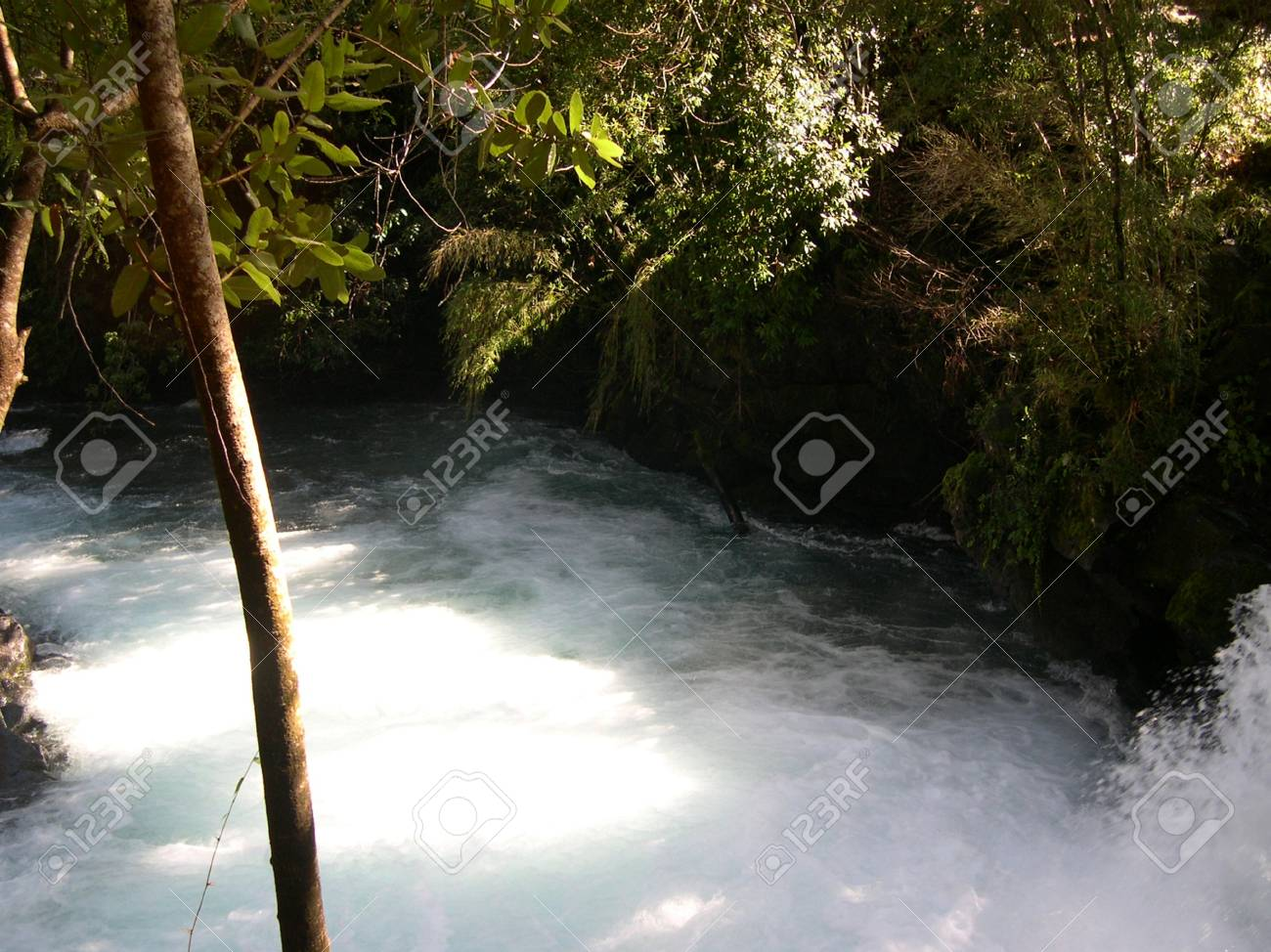 Forest and River, south of Chile Stock Photo - 18358008