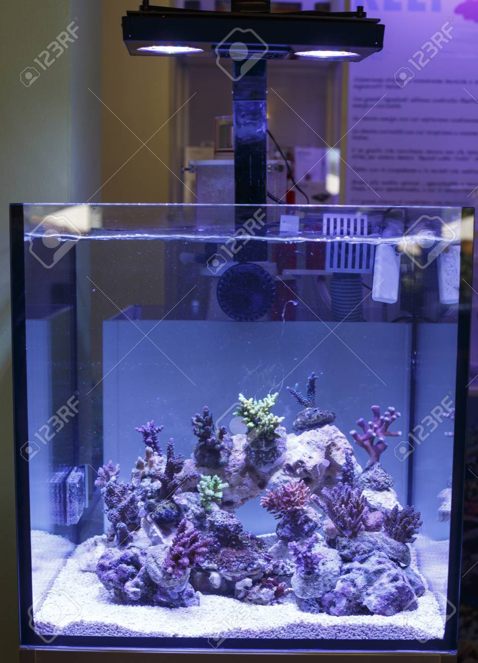 A marine aquarium with corals Stock Photo - 20725581