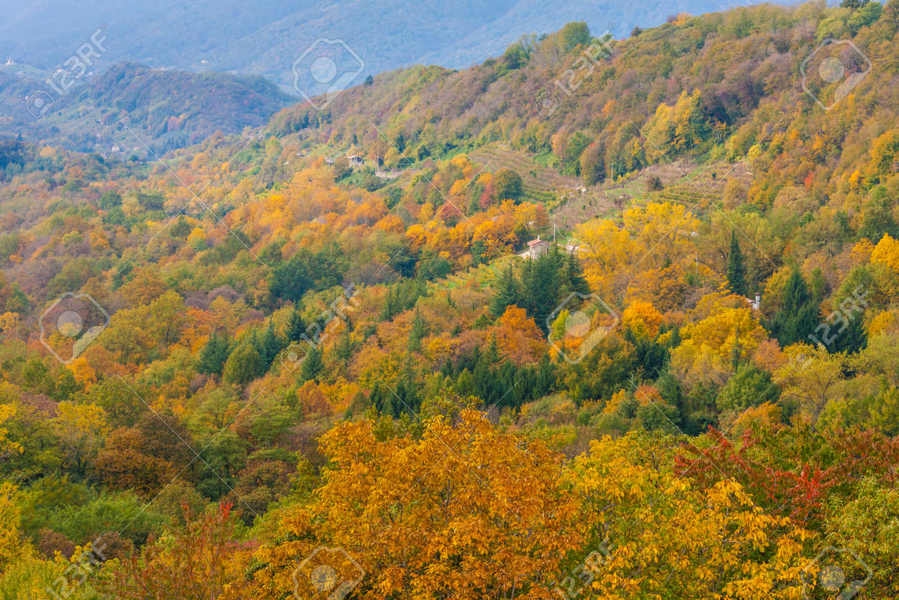 The spectacular colors of autumn / Trevigiani hills / Veneto Region - 156839894