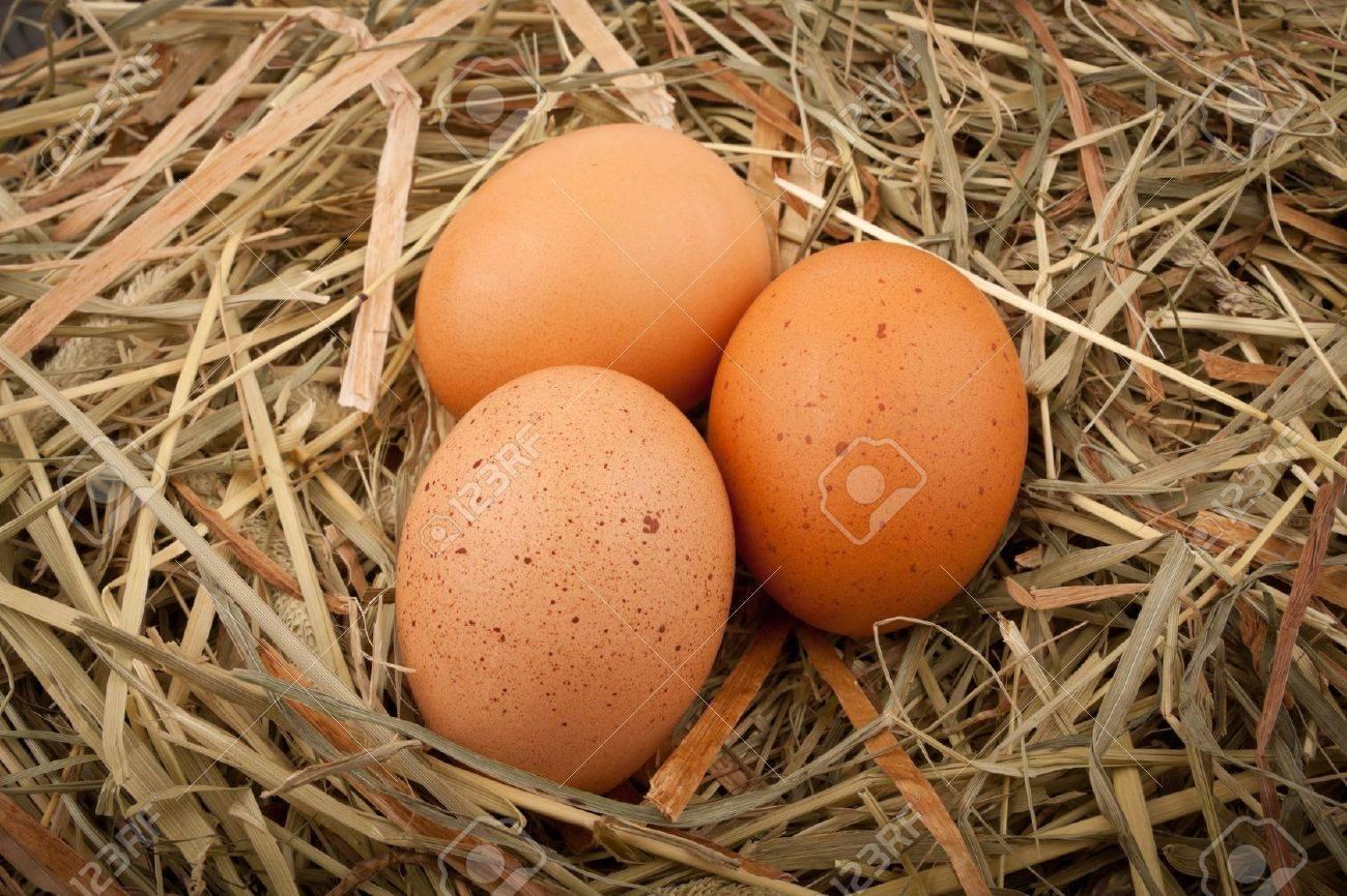 Fresh chicken eggs in straw nest - 13219426