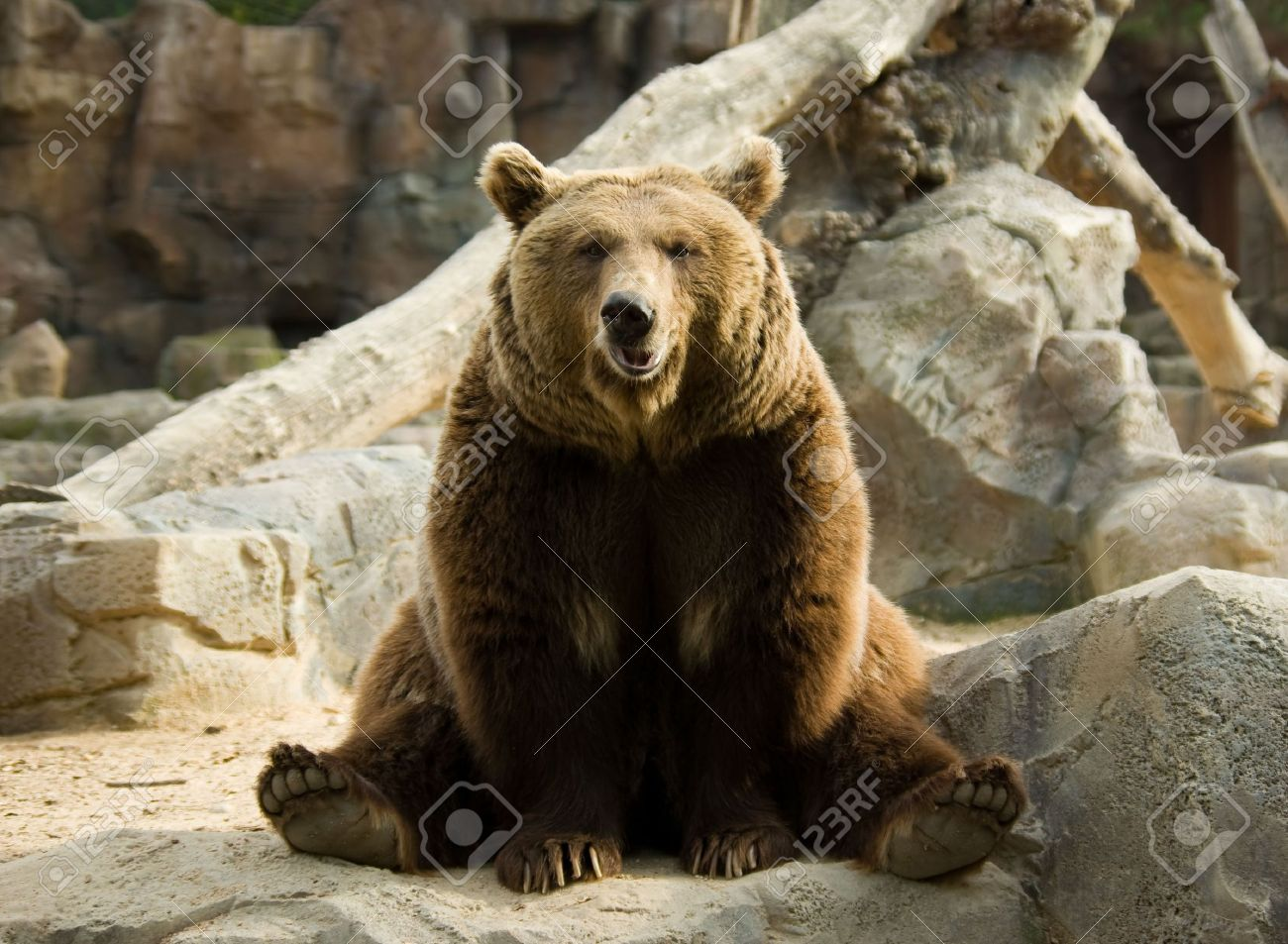 4568181-brown-bear-sitting-calmly-in-a-funny-pose-on-a-rock.jpg