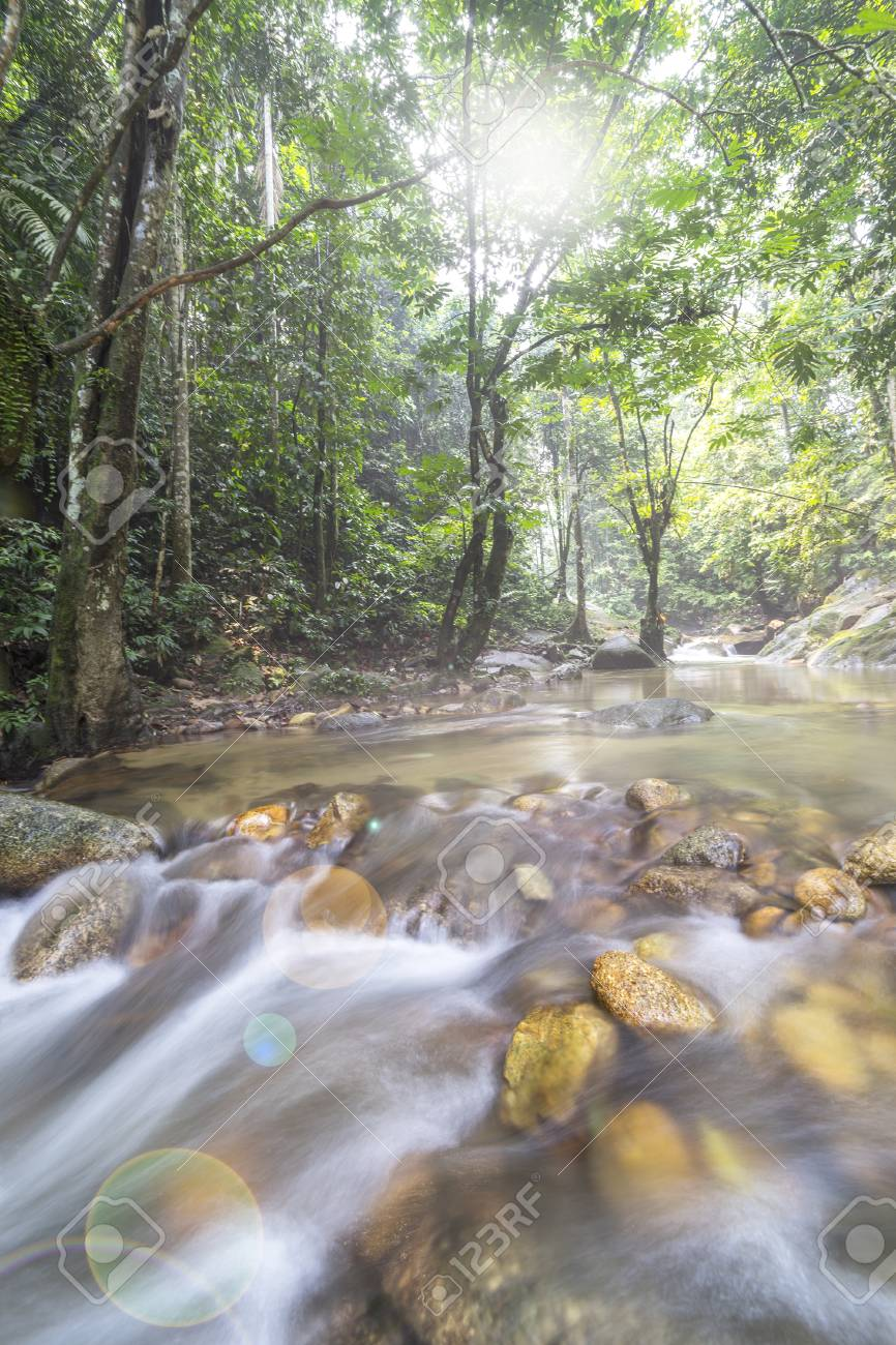 Natural Flow Of Water Stream At Tropical Forest Stock Photo Picture