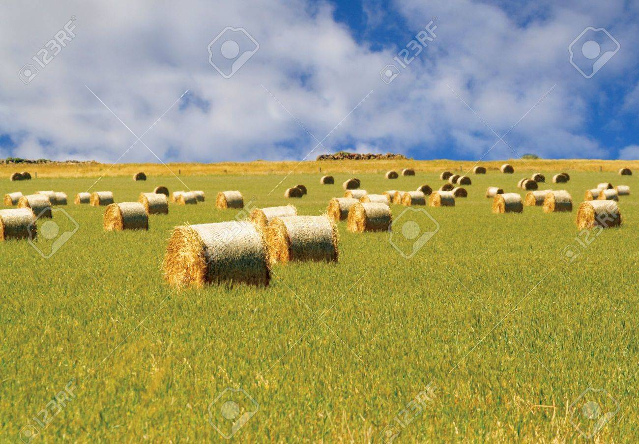 Straw hay bales Stock Photo - 2326691