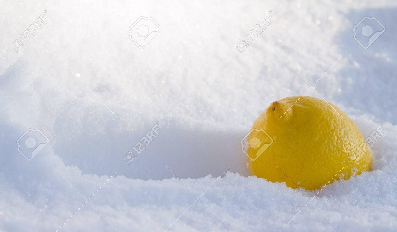 Lemon In snow - 9179024