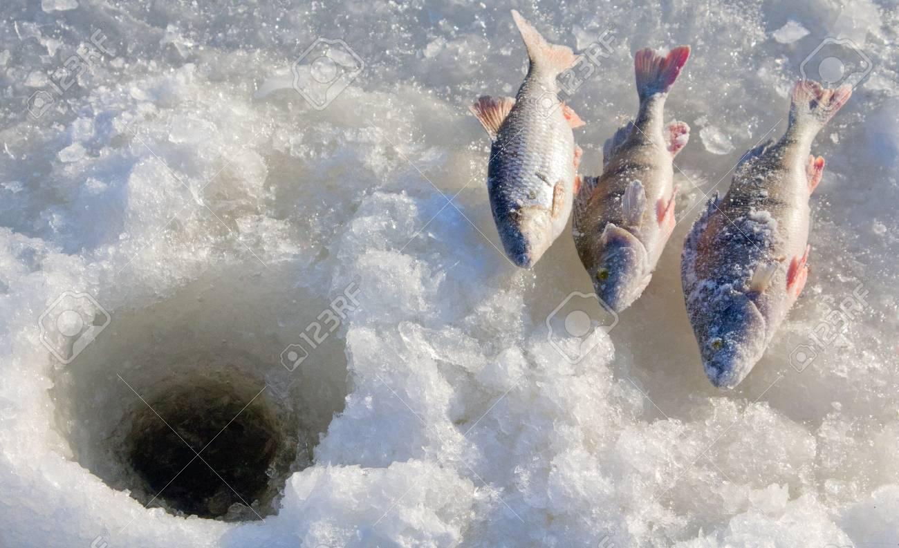 perch fishing 4 - 12248129