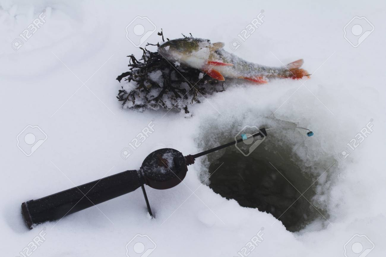freshwater perch  on the ice fishing first in new year Stock Photo - 16855869