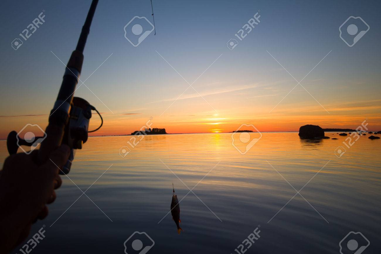 summer catching fishing of a perch in the evening - 36508037