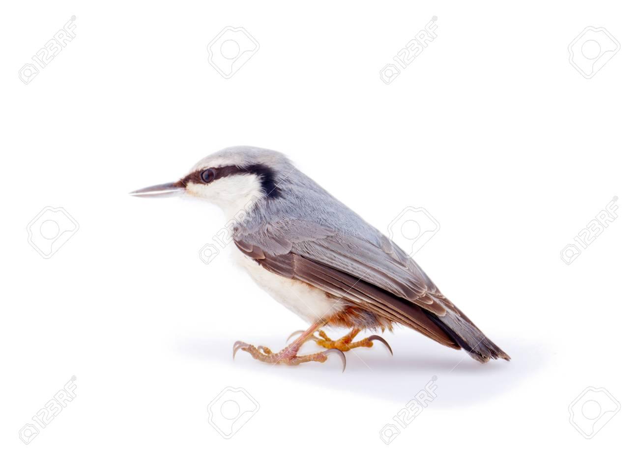 European bird isolated on white close up - 44024855