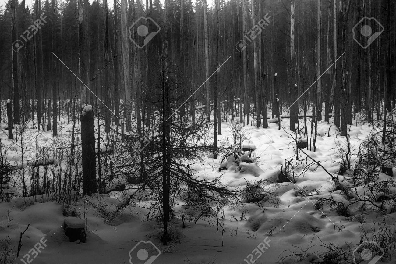 Dark winter forest shaded black and white cold depression forest