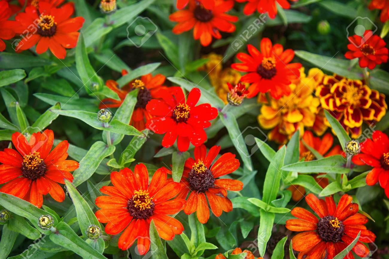 Flowers in Paris squares and parks, garden design, flower bed... on petunia garden bed, sunflower garden bed, zinnia mix flower bed, sweet pea garden bed,