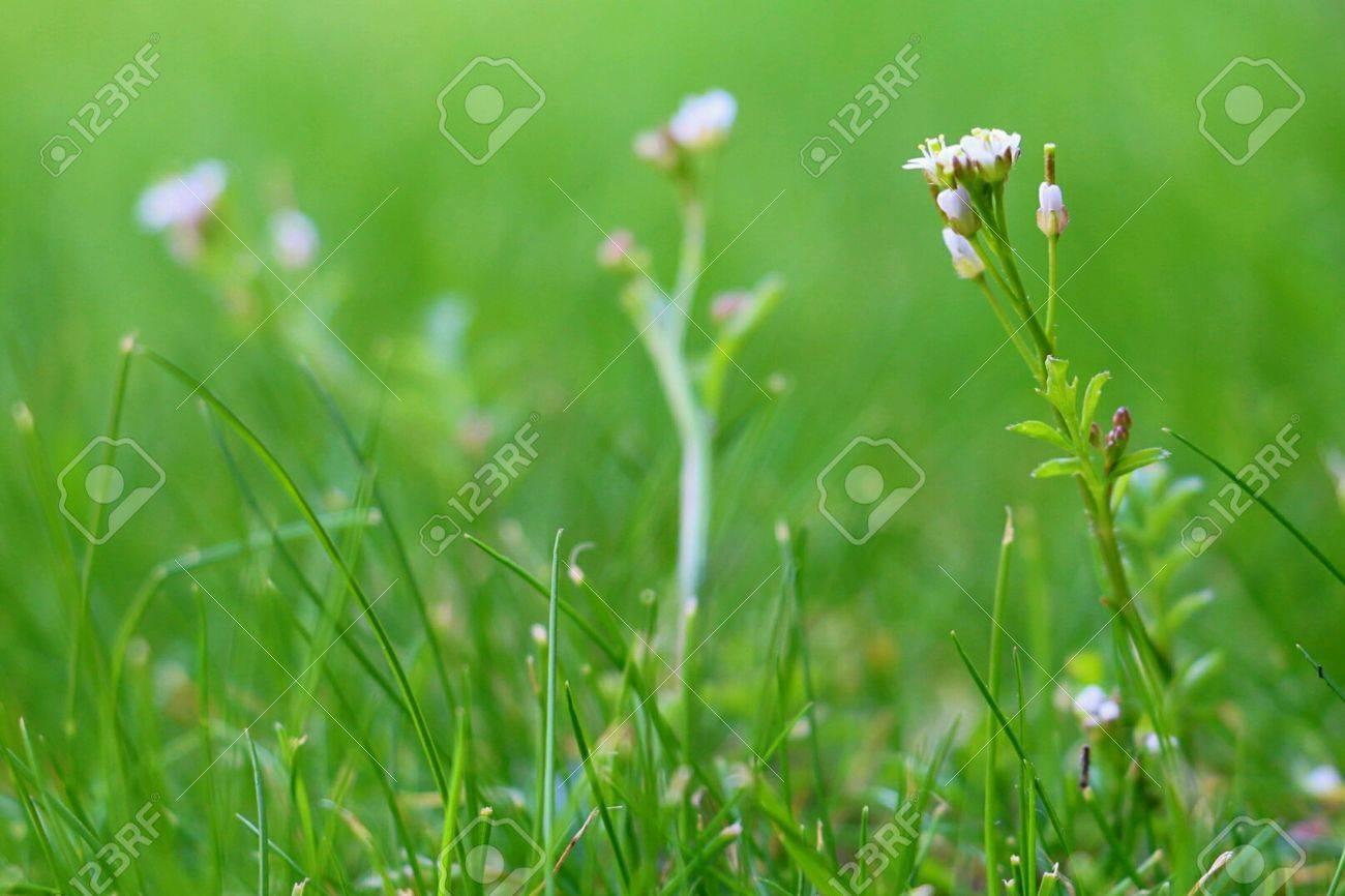 Single White Flower Against Green Bokeh Background Macro