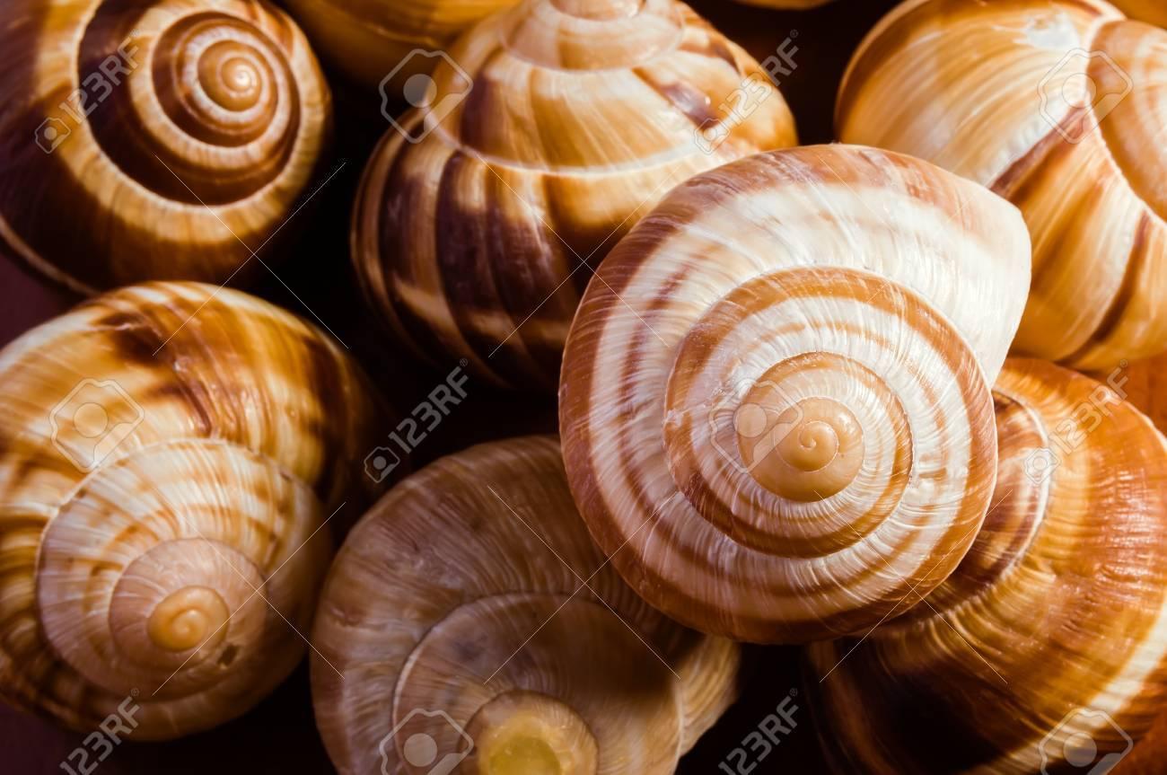 group of snail shells escargots de bourgogne under the sunlight