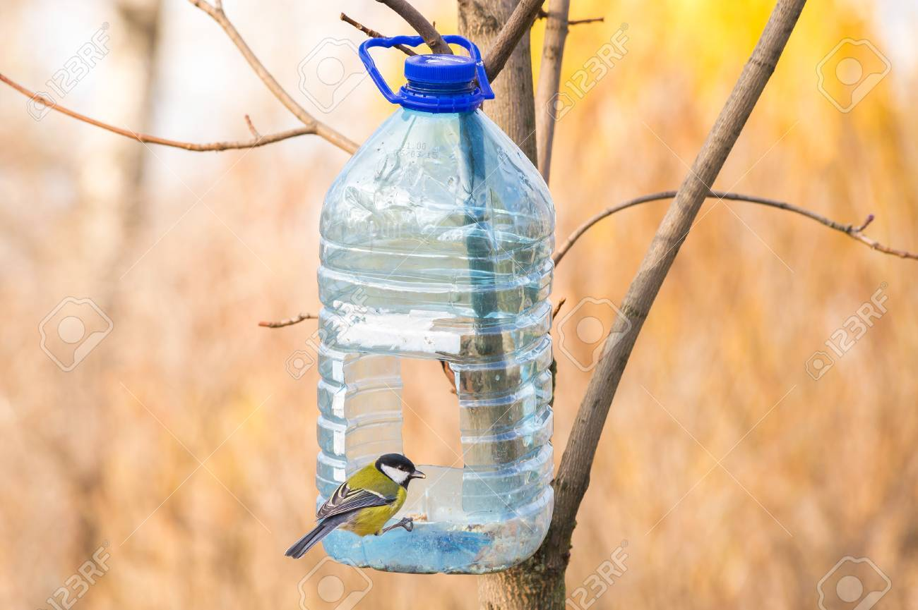 yellow of colors feeder warbler rumped molly hashimoto winter bird birds the on pi