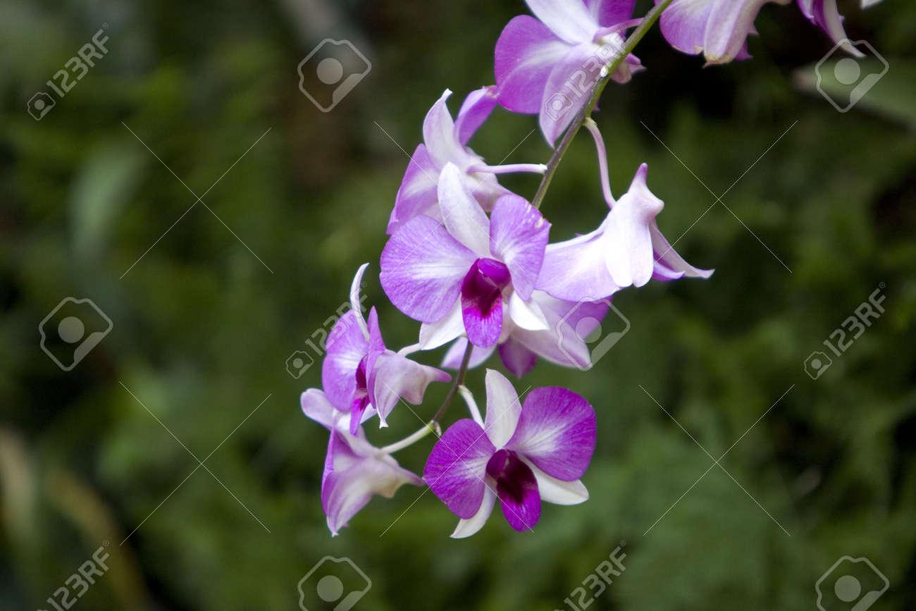 Colorful Fleurs De L\'orchidée Dans Le Jardin Banque D\'Images Et ...